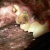 6.rozsáhlý zubní kaz u labradorského retrívra